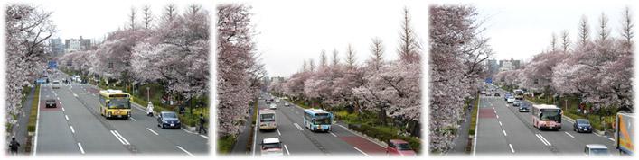 大学通りを走る3台の「リラックマバス」